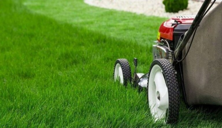 Lawn Care Basics for Beginners