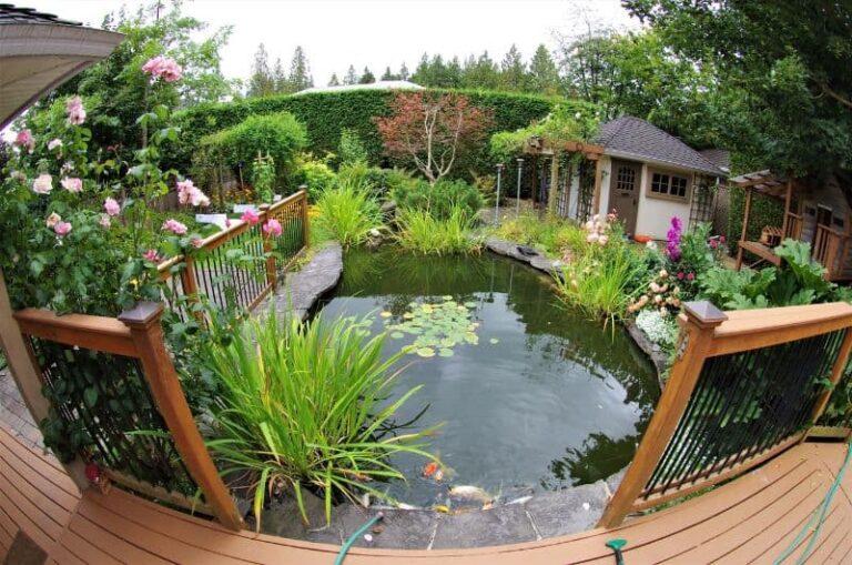 Garden Pond Building Tips