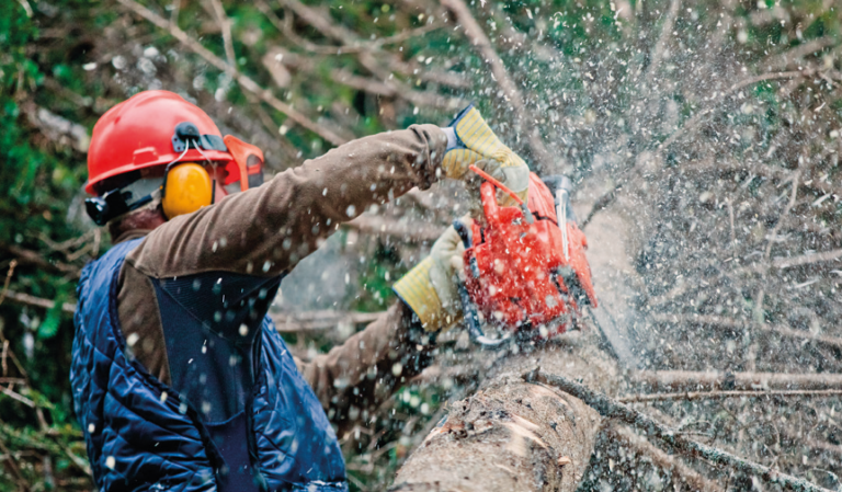 How do I select the right Tree Surgeon?