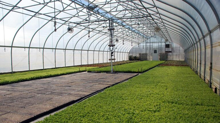 Planning to Build Your Own Greenhouse?